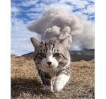 Cat and explosion - Cat walking away from explosion or eruption