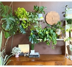 House plants - Household background featuring plants